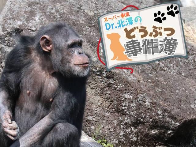 育児放棄されたチンパンジーが命と引き換えに教えてくれたこと | スーパー獣医 Dr.北澤のどうぶつ事件簿 | WANI BOOKS NewsCrunch(ニュースクランチ)