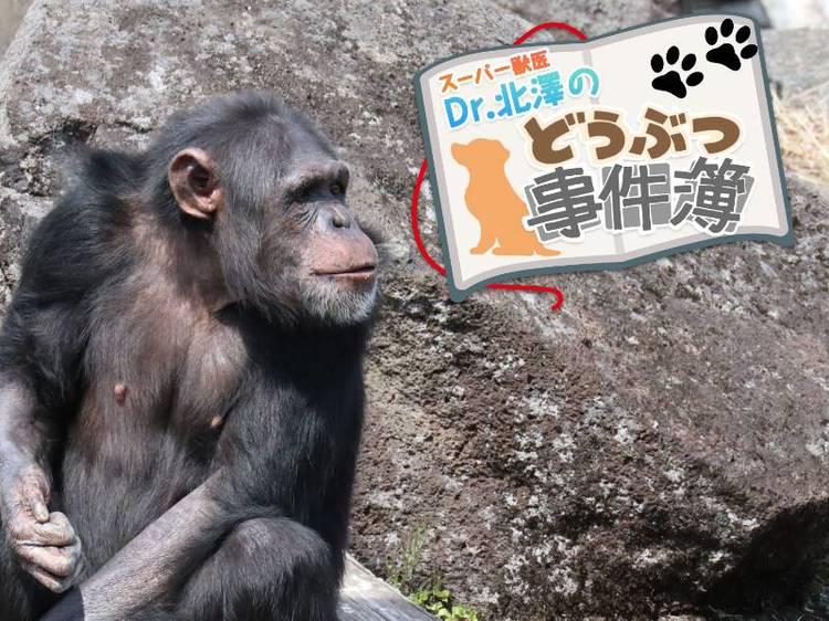 育児放棄されたチンパンジーが命と引き換えに教えてくれたこと   スーパー獣医 Dr.北澤のどうぶつ事件簿   WANI BOOKS NewsCrunch(ニュースクランチ)